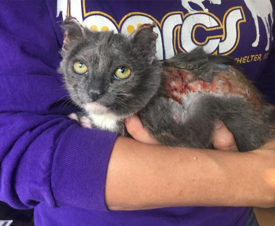 Kitten With Burns On Nearly 80% Of Her Little Body Is Getting The