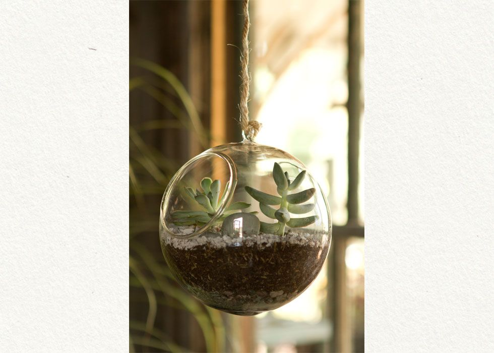 Can T Wait To Hang Plants In Our Big Window Studio Inspiration