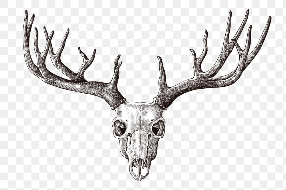 Hand Drawn Deer Skull With Antler Design Element Free Image By Rawpixel Com Hein