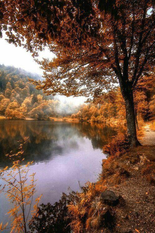 autumn lake #autumnscenery