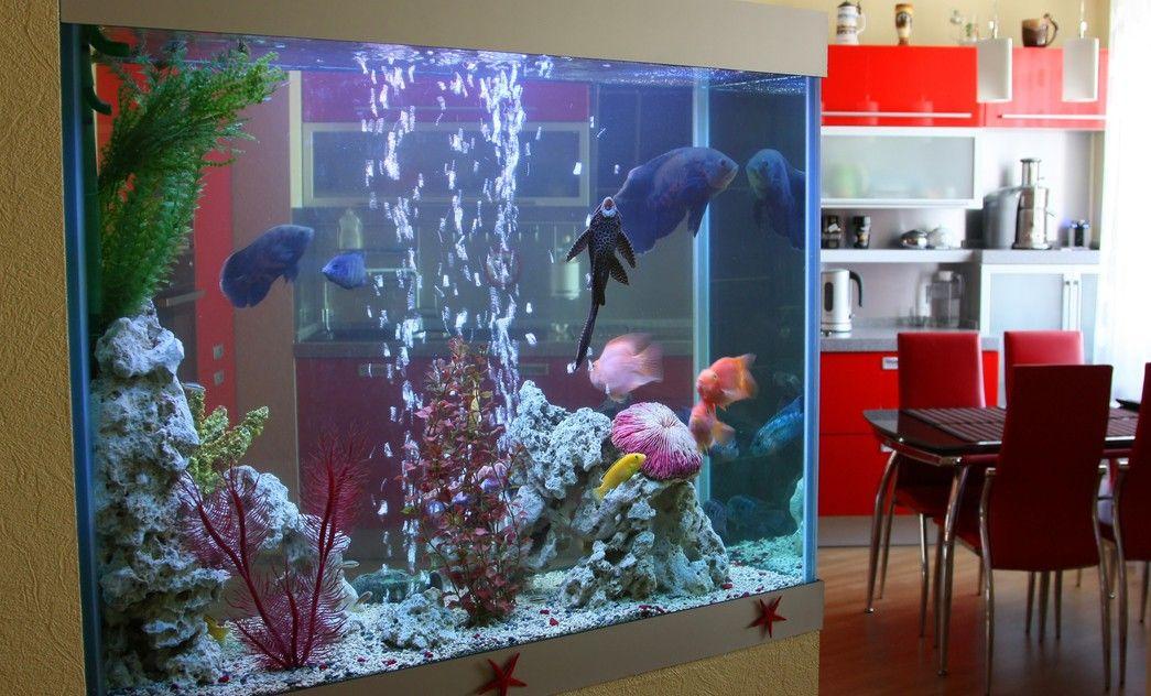 Peceras decorativas para el hogar peceras chic pinterest acuario peceras y peceras en casa - Peceras para casa ...