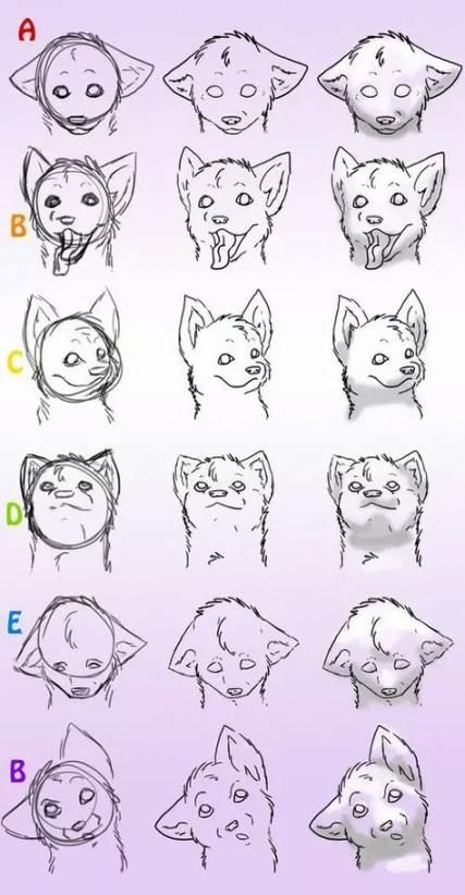 How to Draw a Wolf Step by Step