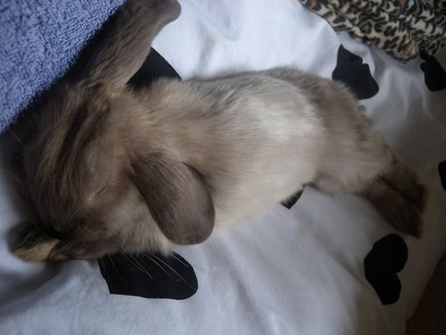 Sleepy bunny.