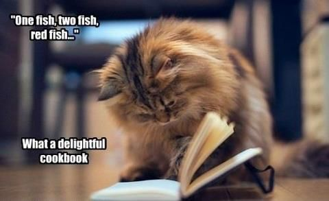 Cooking with Cats. | Beautiful cats, Cats, Cat reading