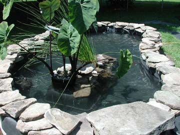 Starting something like this this weekend the turtles for Outside pond plants