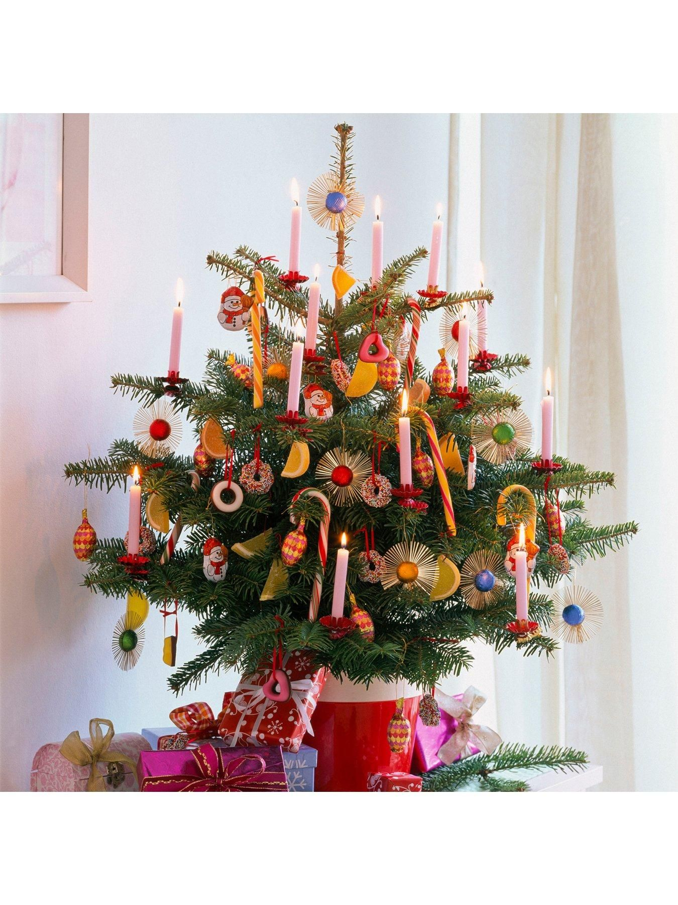 Fresh Potted Nordmann Fir Christmas Tree 1.21.4M in One