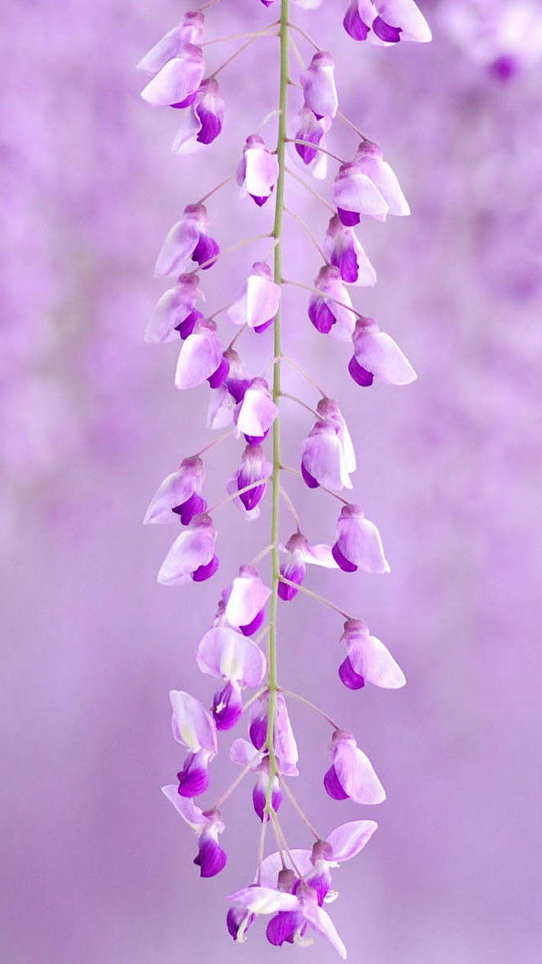 Small Purple Flowers Samsung Galaxy S5 Samsung Galaxy S5