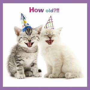Dominoquery Com Cat Birthday Cards Funny Happy Birthday Meme Happy Birthday Pictures