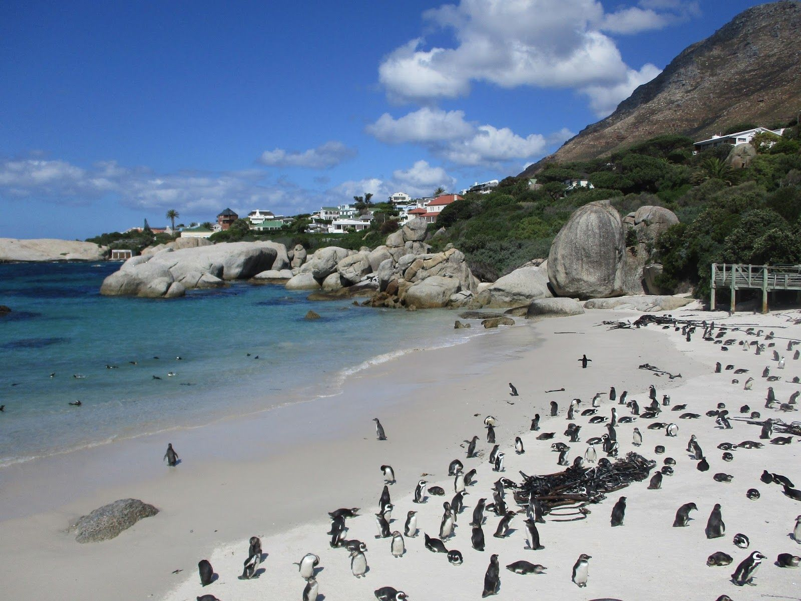 It S A Bit Surreal To See Penguins Sunbathing On Beach Boulders South Africa Click The Photo Discover Most Incredible Destinations