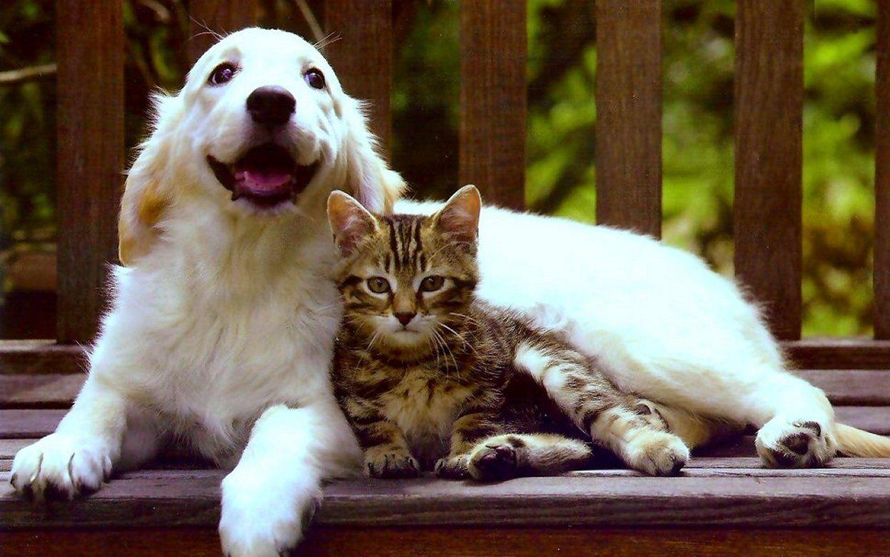 Dog Cats Lovers Cute Wallpaper Cartoon Cute Friends Cat Puppy Dog Love Kitten Hd Wallpaper 1694064 Cats Dog Love Cat Lovers