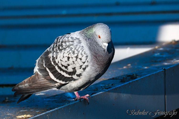 Wie Alt Werden Vögel In Der Natur