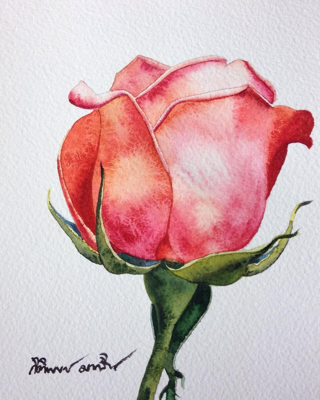 The Single Rose Flowers Roses Artists Art Aquarius Aquarelle Waterblog Watercolor Watercolorist Watercolorgalle Flower Drawing Flower Art Floral Art