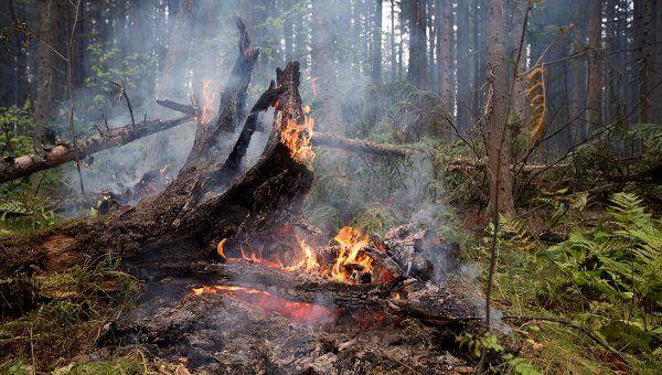 Планета Земля и Человек: Центр восстановления сгоревших лесов может появить...