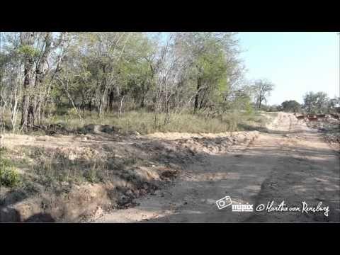 Un leopardo, unos impalas y una turista en el lugar y momento exactos  Los safaris fotográficos en África siempre ofrecen la oportunidad de obtener buenas fotografías o vídeos.   Pero muy pocas veces permiten obtener imágenes que escasean incluso en los mejores documentales de la naturaleza.