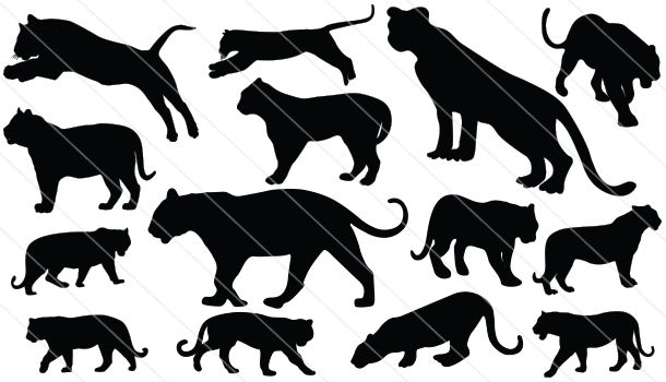 Tiger Silhouette Vector Download Tiger Vector Silhouette Tiger Silhouette Silhouette Vector Animal Silhouette