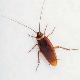10 ways to keep roaches out of the house neat ideals rid of ants roaches diy pest control. Black Bedroom Furniture Sets. Home Design Ideas