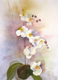 Phalaenopsis Orchid By John Manning Orchidee Phalaenopsis