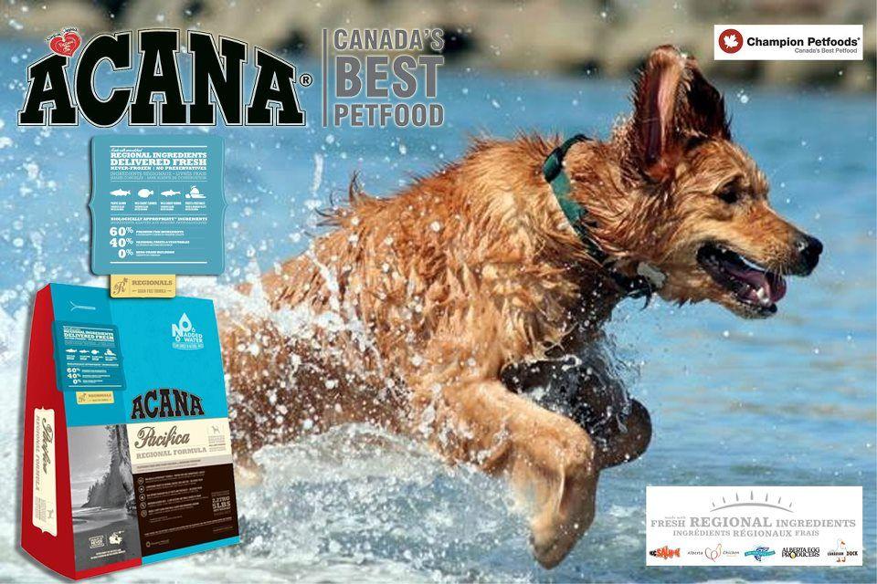 Acana Pacifica Dog Beach Dog Bucket List Dogs Golden Retriever