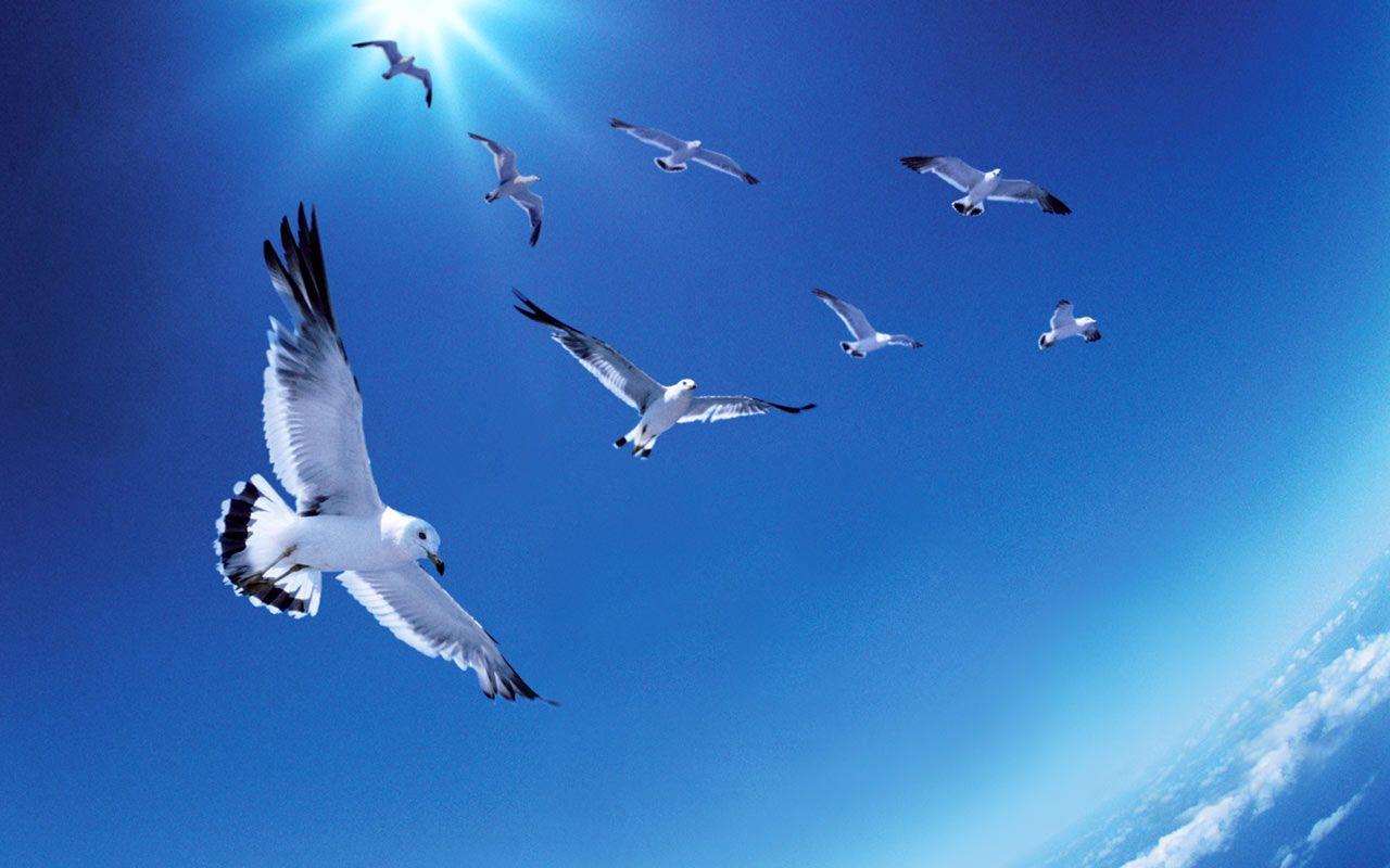 Birds Flying Wallpaper High Quality Resolution Birds Wallpaper Hd Bird Wallpaper Birds Flying