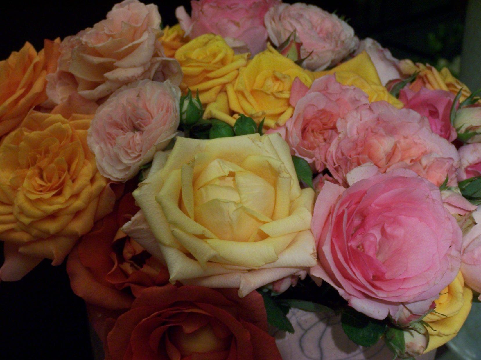 rosas varios tonos