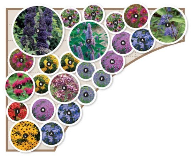 Butterfly Garden Zone 5 8 13 Varieties 24 Plants Layout For