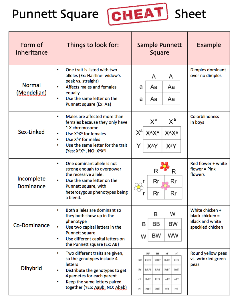 Square Cheat Sheet Biology lessons, Science