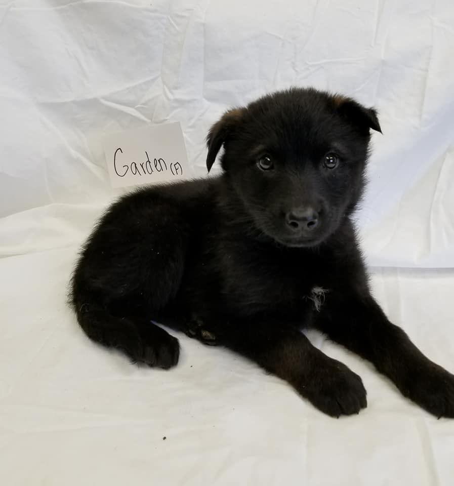 Adopt Garden On Collie Dogs Shepherd Mix Dog