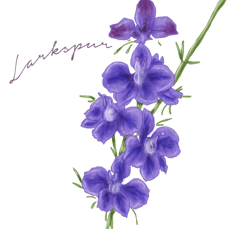 Beautiful but deadly poisonous wild flowers wild flowers tattoo beautiful but deadly poisonous wild flowers pinetree garden seeds izmirmasajfo