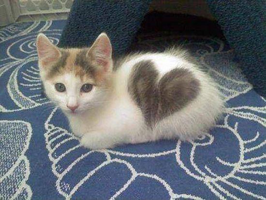 Kitten with a heart