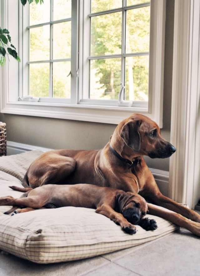 Cute dogs on  cute bed.