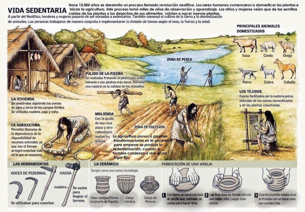 El Baul De La Historia Universal Infografia La Vida Sedentaria En El Neolitico Neolitico Historia De La Agricultura Prehistoria
