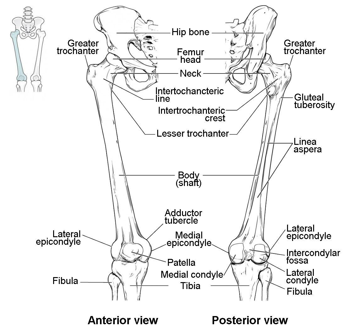 Pin On Skeleton