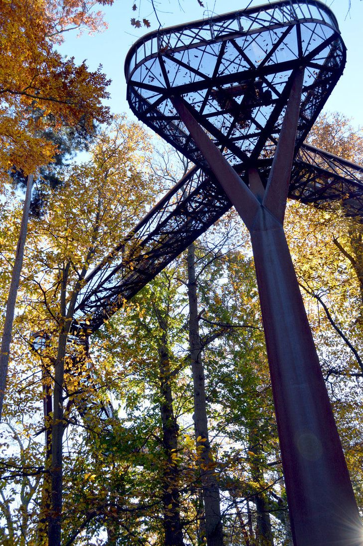 3890c6600b71fe2d513739acee6014ea - How High Is The Tree Top Walk At Kew Gardens