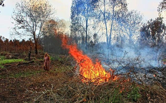 Masyarakat Pegang Peran Penting Atasi Karhutla Kalimantan Hutan Indonesia