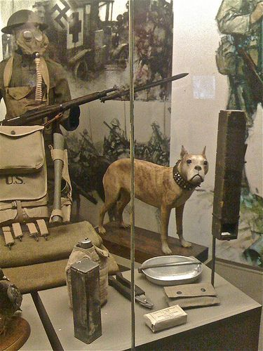 Sergeant Stubby Is Today On Display At The Smithsonian Museum In