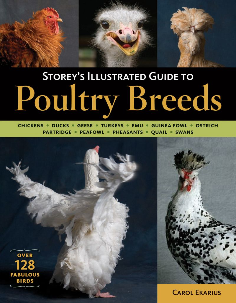 storey u0027s illustrated guide to poultry breeds chickens ducks