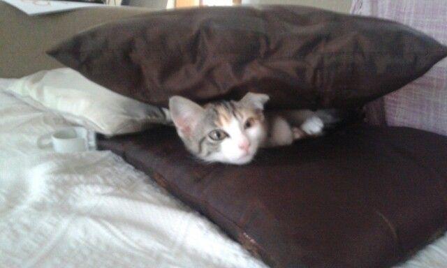Estou escondida