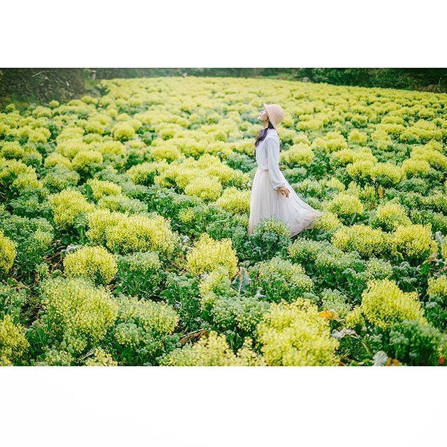 따스한 아침빛이 나에게 말을 건내는 시간. 조용히 그 자연과  마주하는 시간.  좋은아침입니다.😊🌸🌱🌞❤    #beautiful #korea #spring #travel #flower #yellow #shine #morning #jeju_korea  #self #A7r #봄 #봄여행 #봄꽃 #노란색 #셀프 #셀스타그램 #아름다운대한민국 #제주