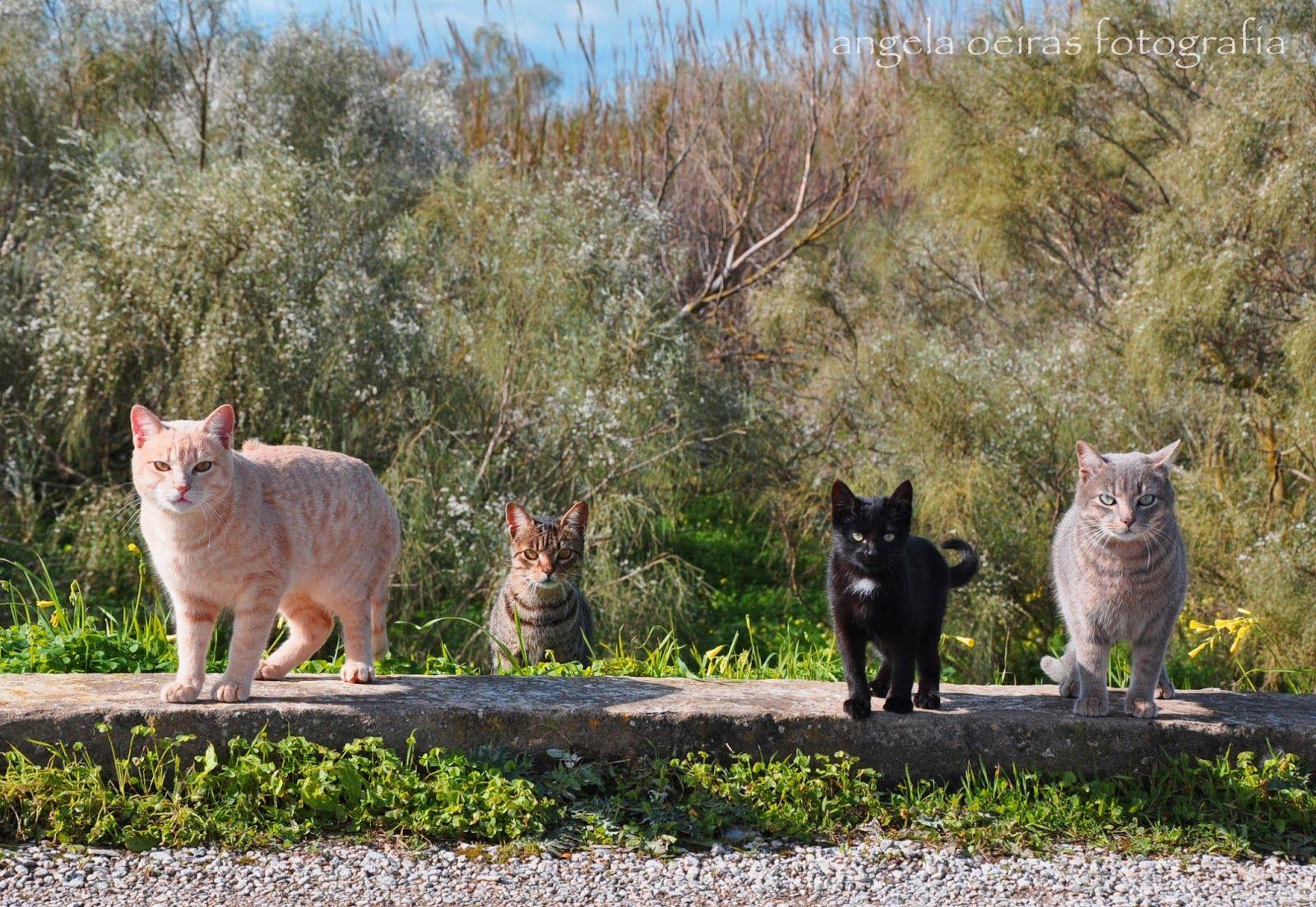 angela oeiras fotografia: Four wild cats posing for me!