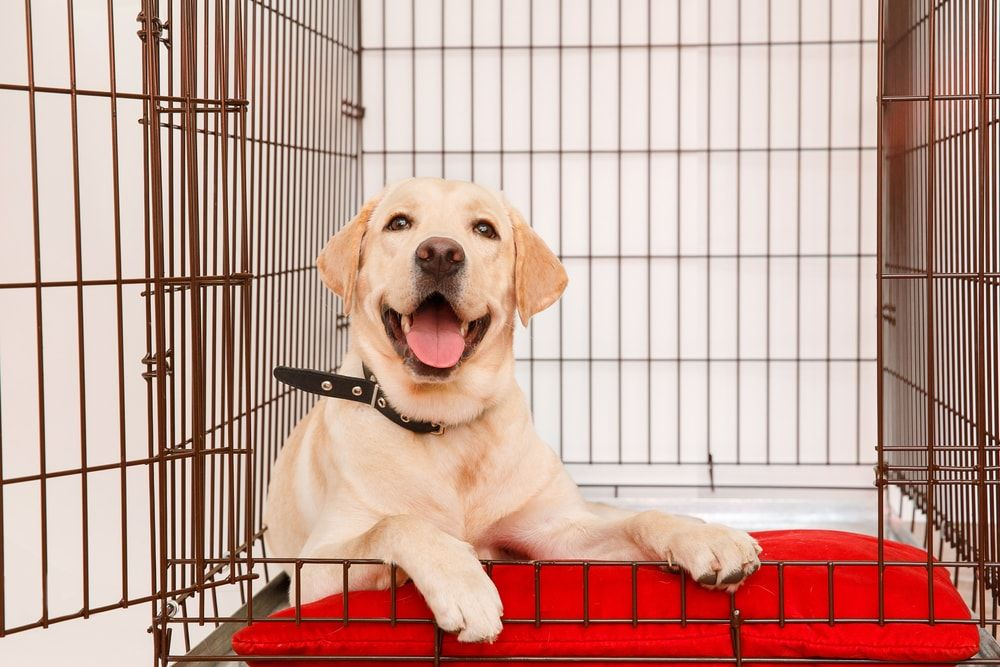 Crate Training A Puppy Everything You Need To Know Kennel
