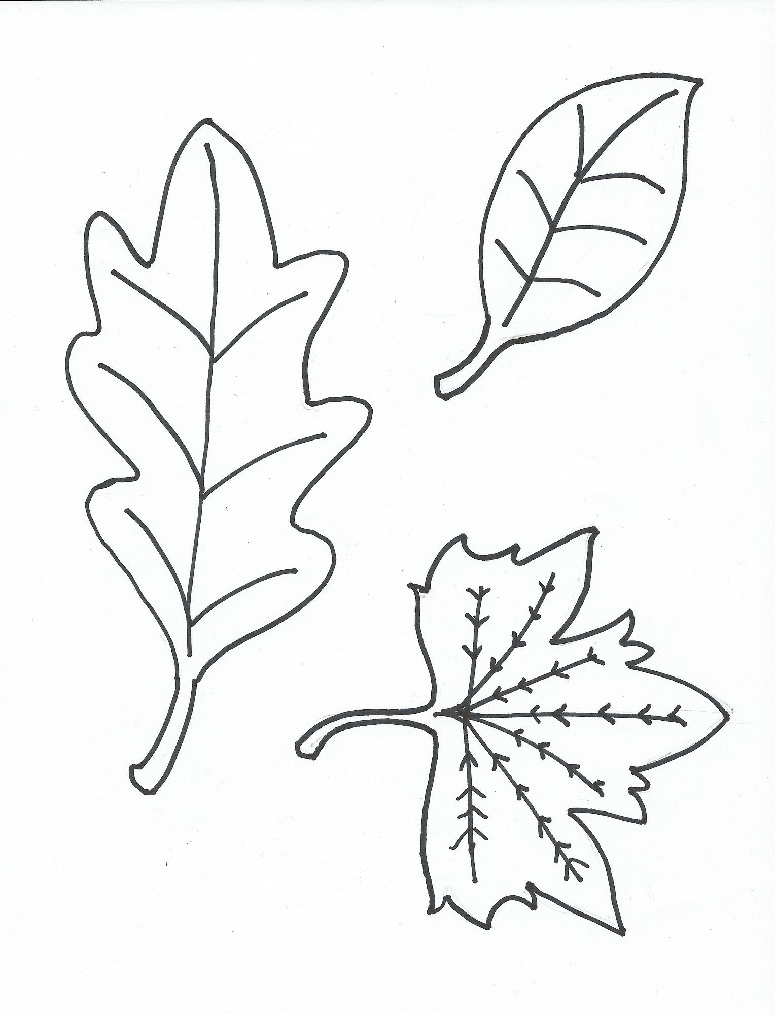 leaf coloring pages for preschool activity shelter - Leaf Coloring Pages Preschool
