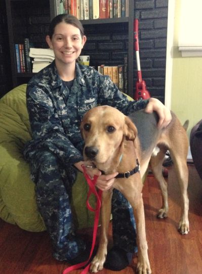 Rescue Dog A Loyal First Mate To Navy Sailor Rescue Dogs Dogs Rescue