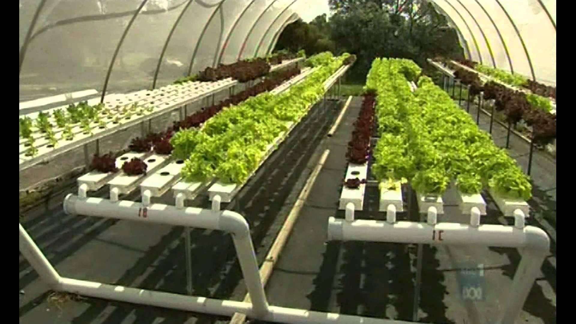 Aquaponic Integrated Farming Aquaponics, Aquaponics