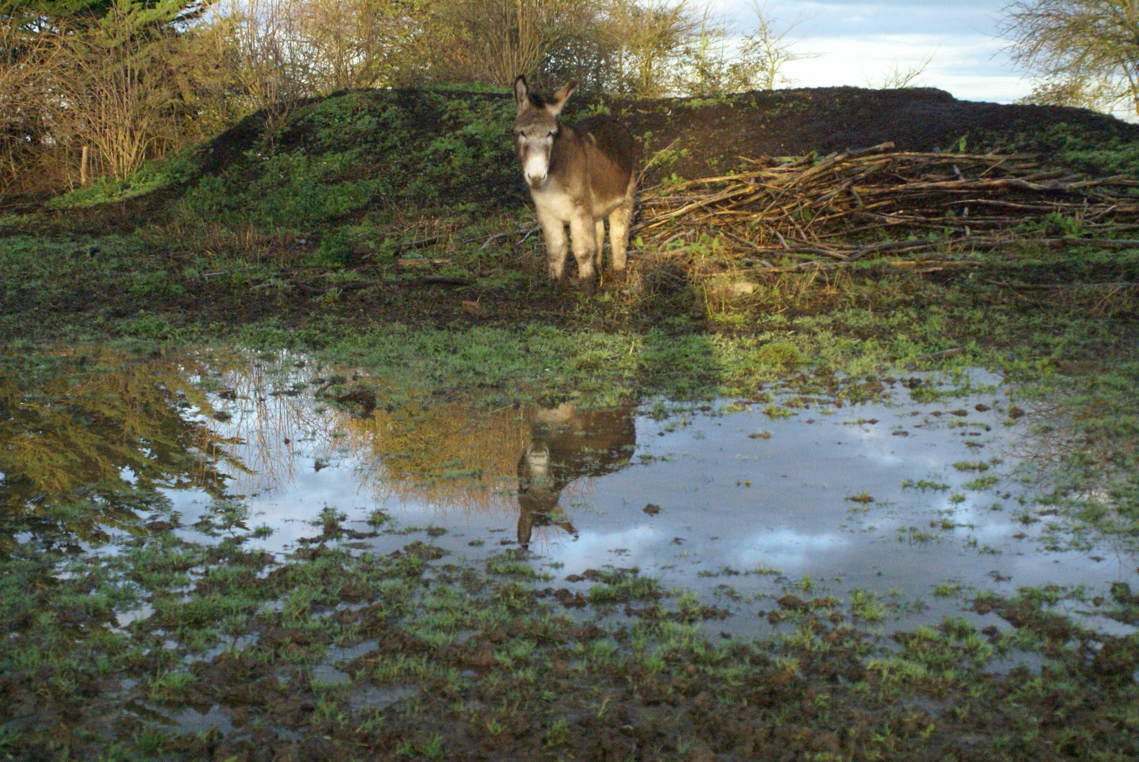 Miroir... Miroir... Mimosa dit moi que tu es le plus beau. Courtesy: Korrig'âne, Planguenoual (France).