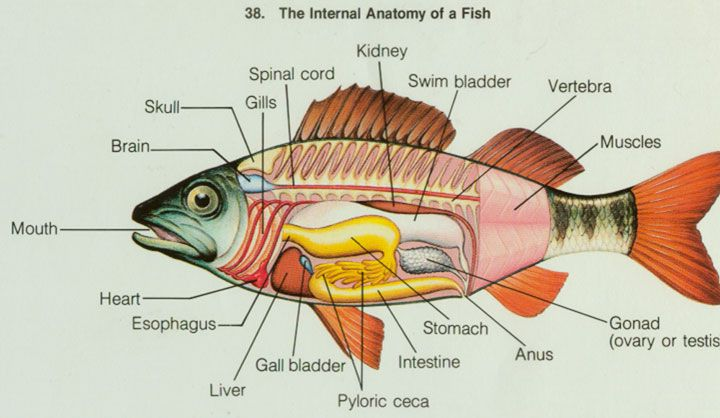 Labeled Parts Fishinsides