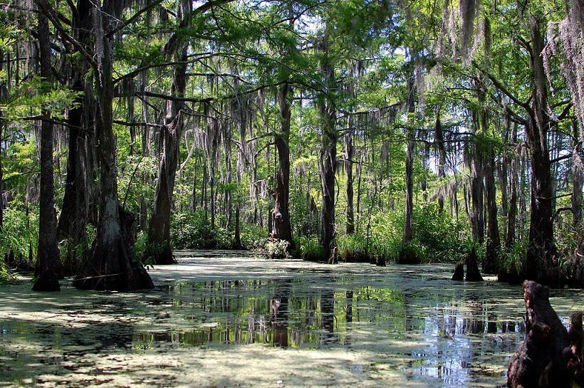 Atchafalaya Swamp | Louisiana Swamp Base