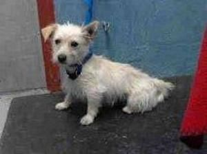 Adopt Jonah Adopted On Dogs Small Terrier Terrier Mix Dogs