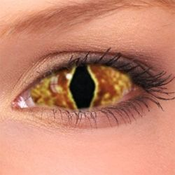 caa88e4d743 Hell Cat Sclera Contact Lenses (1 pair)
