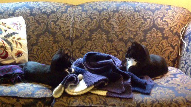 Mina  #video #animals #cats