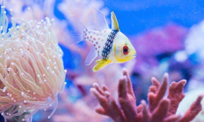 Fauna marina<br> | ilusión | Pinterest | Ilusiones, El mar y Fondos